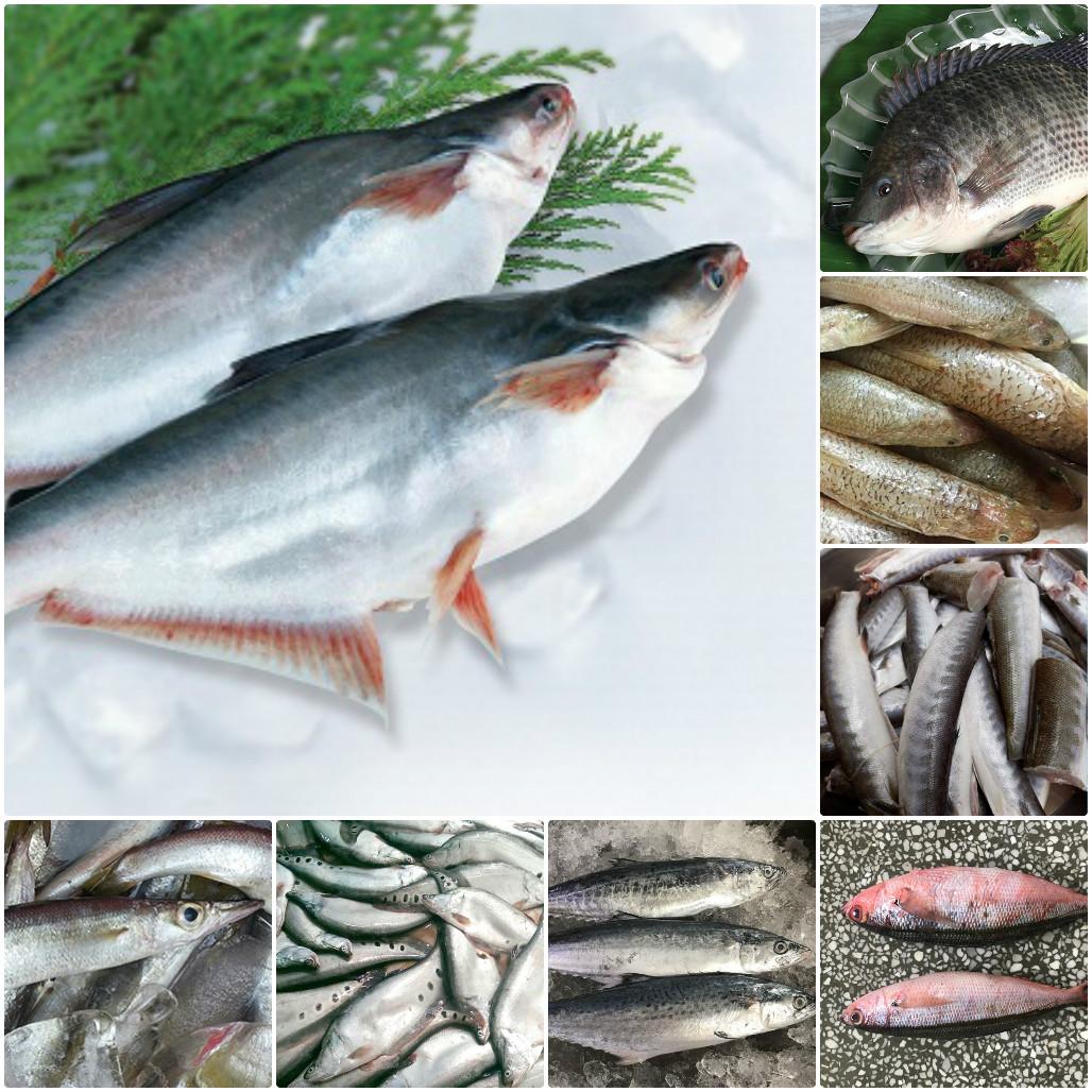 Một số loại cá làm chả cá