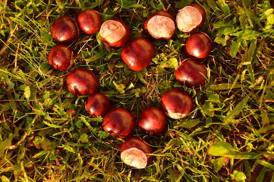ăn hạt dẻ có tác dụng gì 10