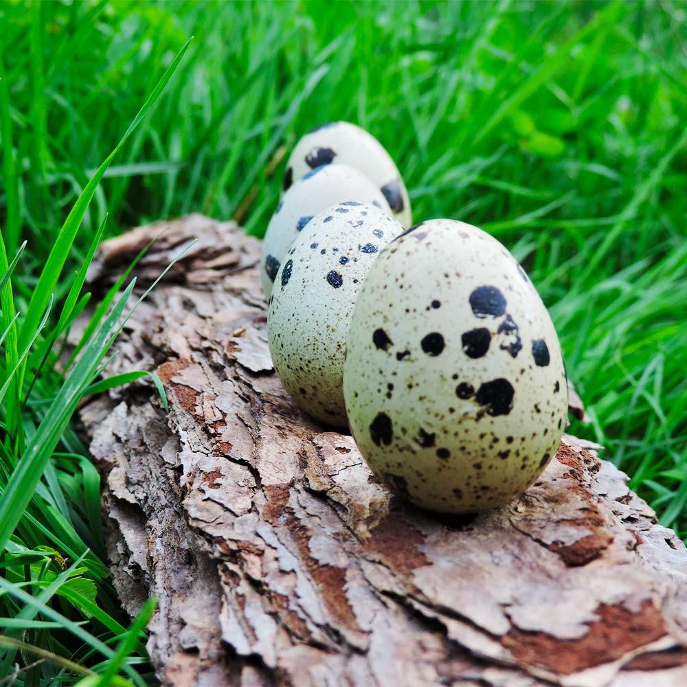 Cách luộc trứng cút lộn